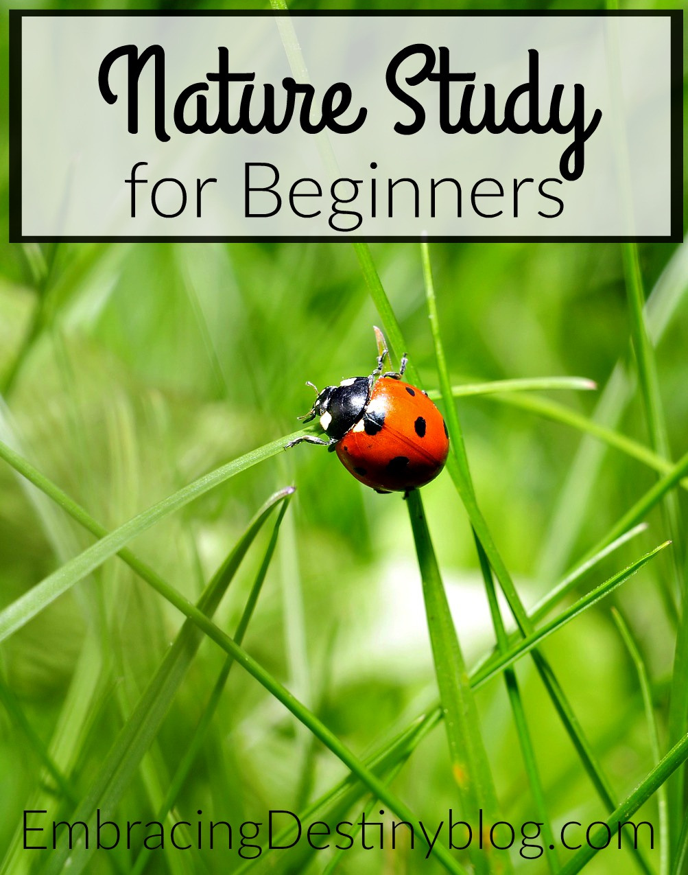 Nature Study for Beginners
